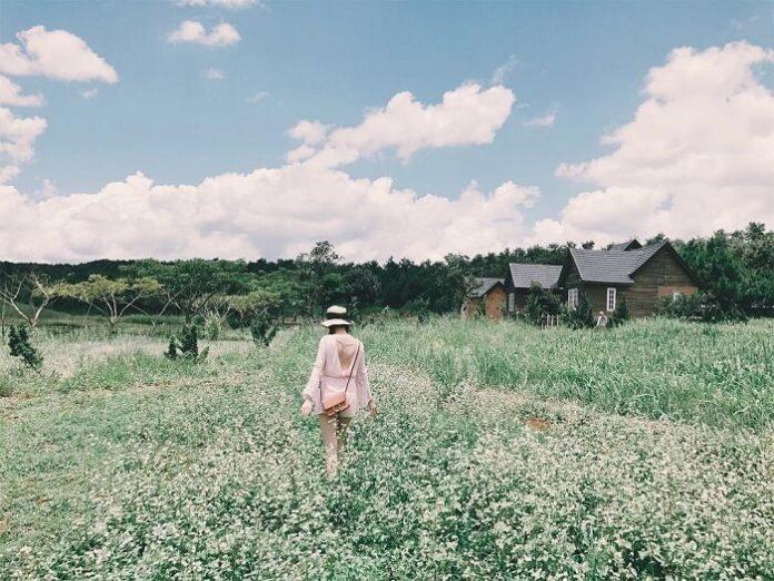Kinh nghiệm du lịch Đà Lạt: 5 cánh đồng hoa lãng mạn say đắm lòng người